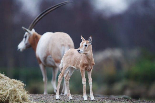Top 20 things to do in Dublin: Dublin Zoo