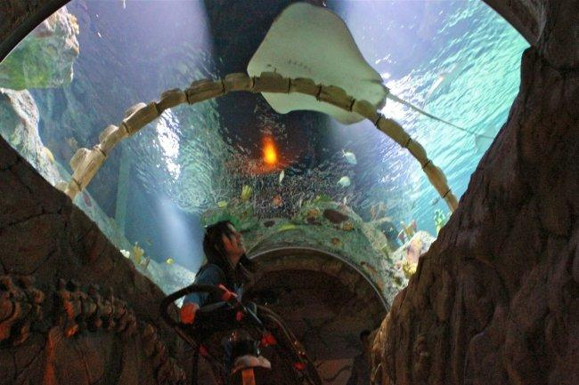 Top 20 things to do in Kansas City: SEA LIFE Kansas City Aquarium