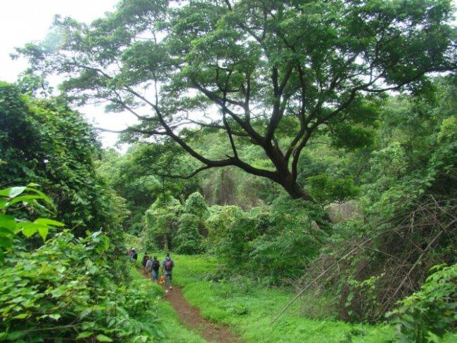 Top 20 things to do in Mumbai: Sanjay Gandhi National Park