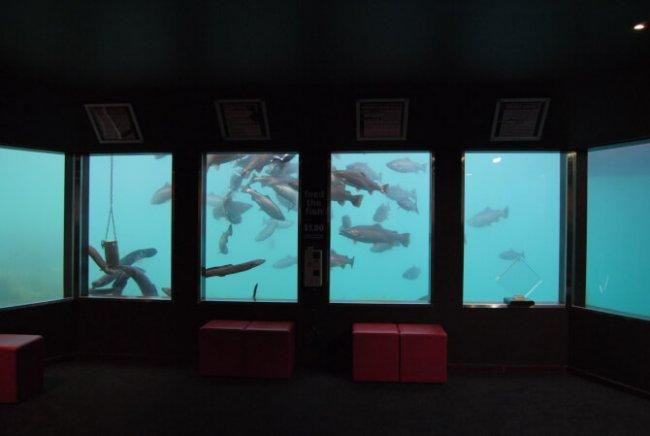 Top 20 things to do in Queenstown: Underwater Observatory